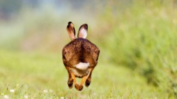 need for speed: Hare winning race lessons to learn for page speed